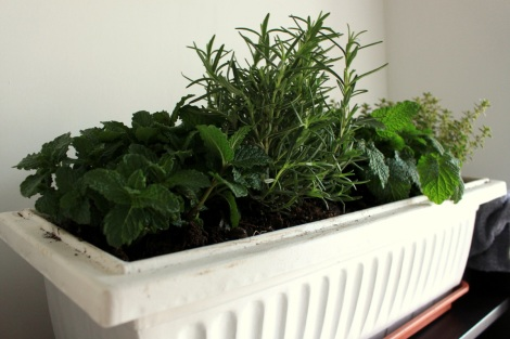 A box full of mint, rosemary, lemon balm and thyme...